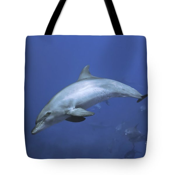 Bottlenose Dolphin Tote Bag by Tom Peled