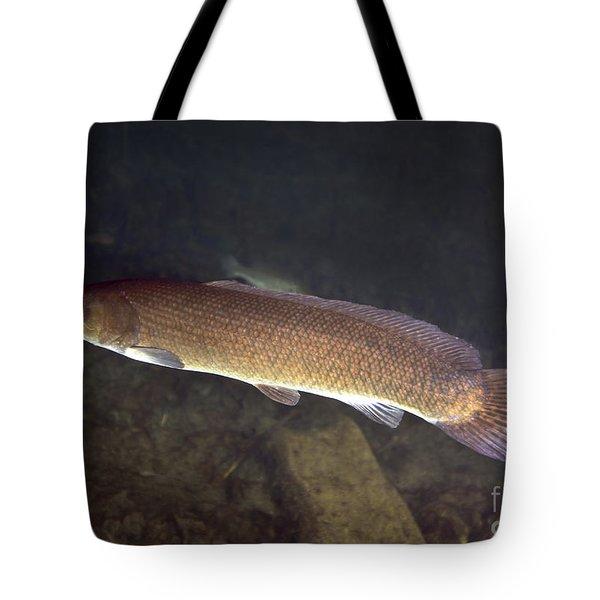 Bowfin Amia Calva Swims The Murky Tote Bag by Michael Wood