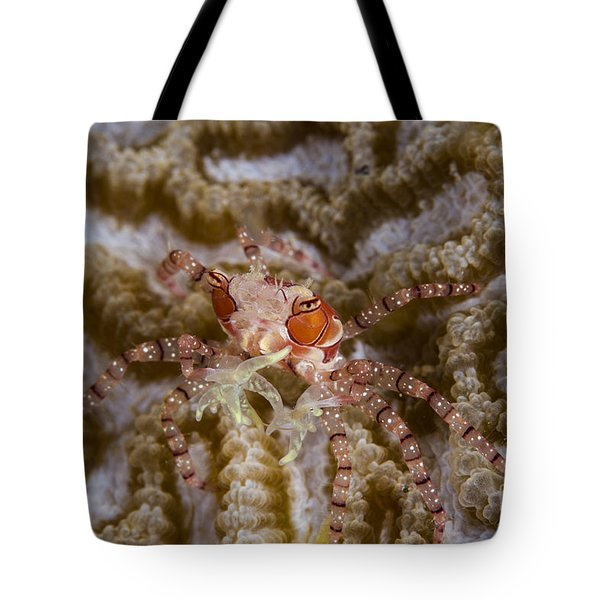 Boxing Crab In Raja Ampat, Indonesia Tote Bag by Todd Winner