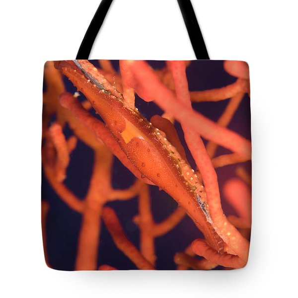 Bright Red Cowrie On Coral, Papua New Tote Bag by Steve Jones