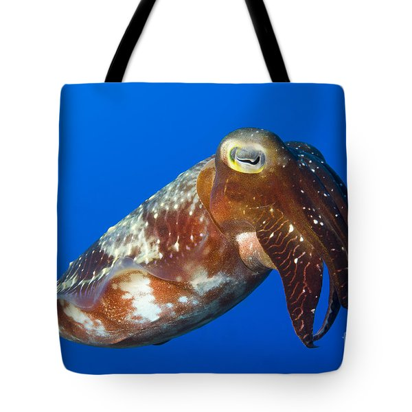 Broadclub Cuttlefish, Papua New Guinea Tote Bag by Steve Jones