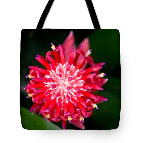Bromeliad bloom Tote Bag by Rich Franco