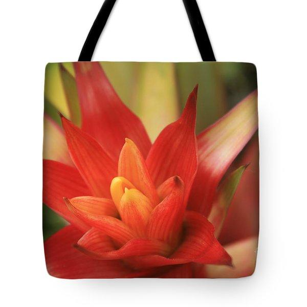 Bromeliad Tote Bag by Sharon Mau