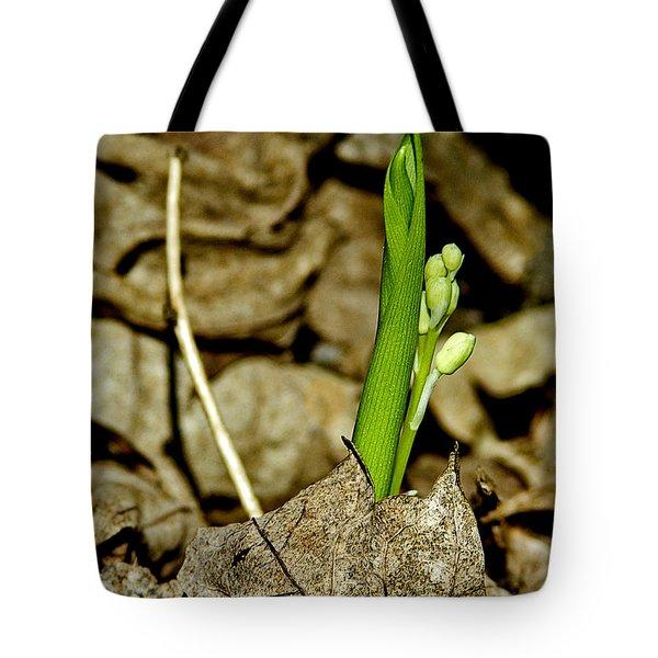 Budding Lilly Tote Bag by LeeAnn McLaneGoetz McLaneGoetzStudioLLCcom