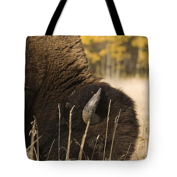 Buffalo Grazing Tote Bag by Philippe Widling