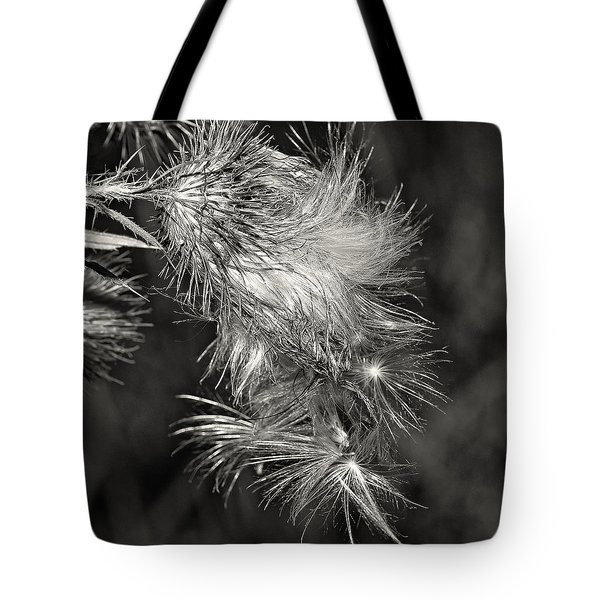 Bull Thistle Monochrome Tote Bag by Steve Harrington