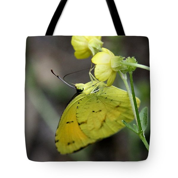Butterfly - Yellow Sulphur On Yellow Tote Bag by Travis Truelove