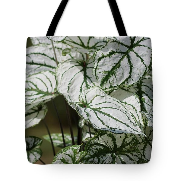 Caladium Named White Christmas Tote Bag by J McCombie