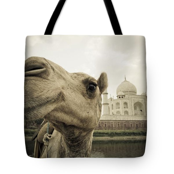 Camel In Front Of The Yamuna River And Tote Bag by David DuChemin