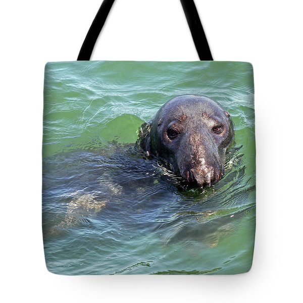 Cape Cod Harbor Seal Tote Bag by Juergen Roth