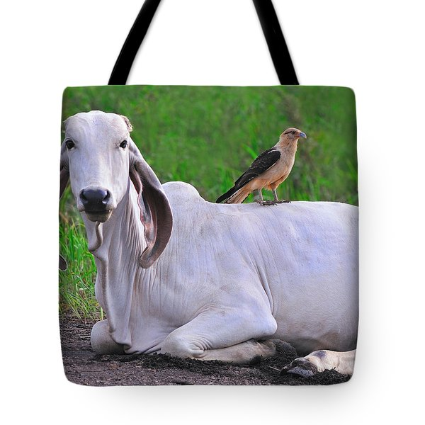 Caracara On My Back Tote Bag by Tony Beck