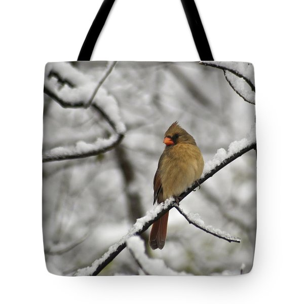 Cardinal Female 3652 Tote Bag by Michael Peychich