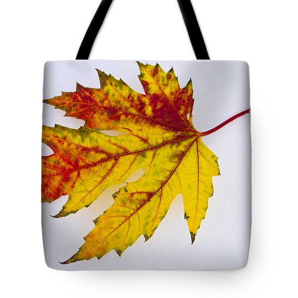 Changing Autumn Leaf In The Snow Tote Bag by James BO  Insogna