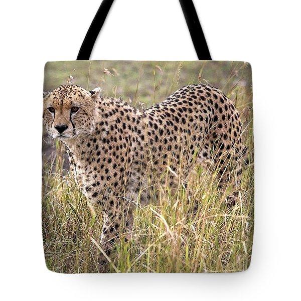 Cheetah Acinonyx Jubatus, Masai Mara Tote Bag by Chris Upton