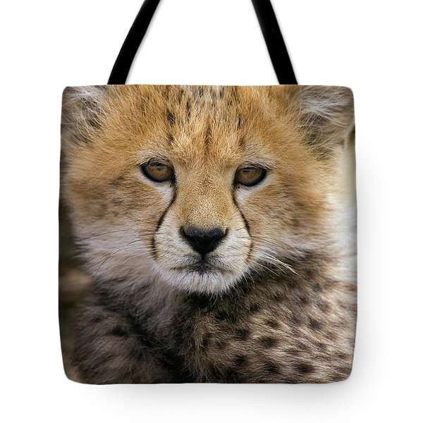 Cheetah Acinonyx Jubatus Ten To Twelve Tote Bag by Suzi Eszterhas