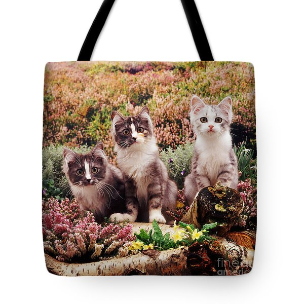 Chinchilla-cross Kittens Tote Bag by Jane Burton