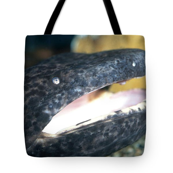Chinese Giant Salamander Tote Bag by Dante Fenolio
