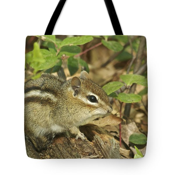 Chipmunk Tote Bag by Michael Peychich