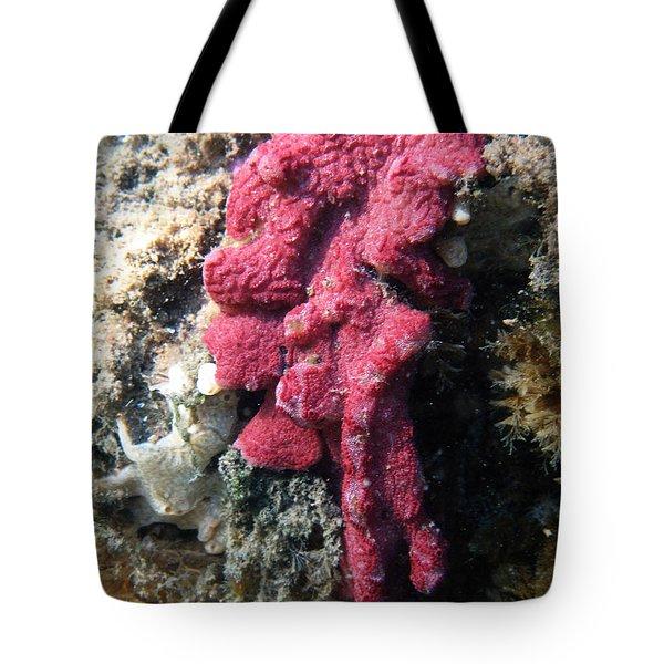Close-up Of Live Sponge Tote Bag by Ted Kinsman