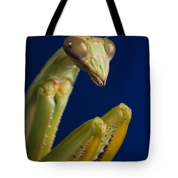 Closeup Of Praying Mantis Tote Bag by Corey Hochachka