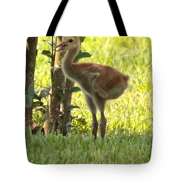 Closeup of Sandhill Baby Tote Bag by Carol Groenen
