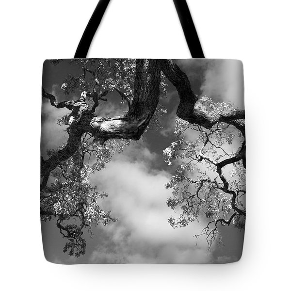 Cloudy Oak Tote Bag by Laurie Search