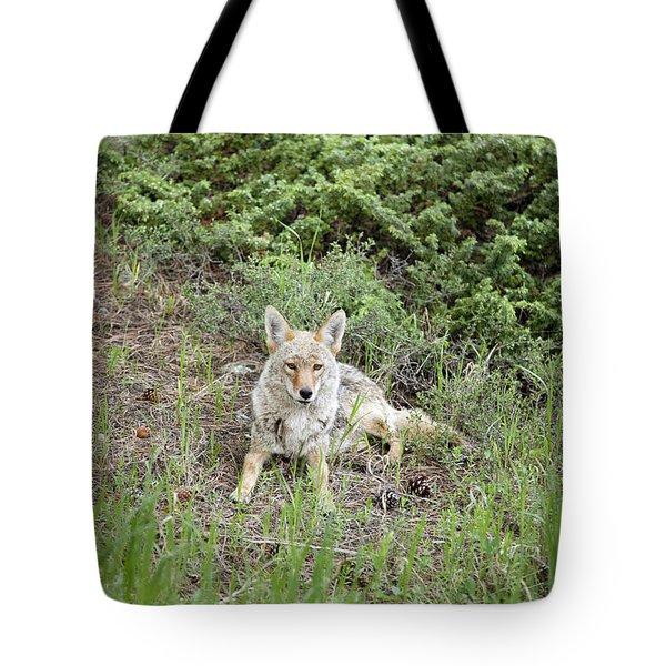 Colorado Coyote Tote Bag by Jenna Szerlag