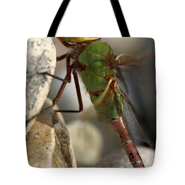 Common Green Darner Dragonfly Tote Bag by Juergen Roth