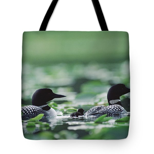 Common Loon Gavia Immer Mated Couple Tote Bag by Michael Quinton