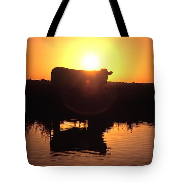 Cow At Sundown Tote Bag by Picture Partners and Photo Researchers