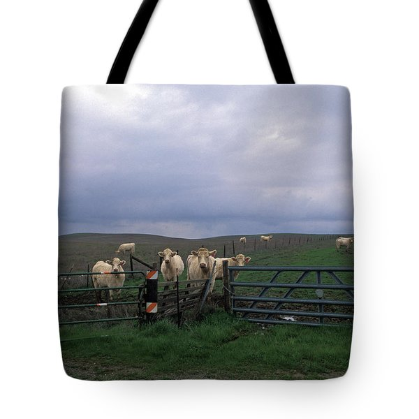 Cow Convergence Tote Bag by Kathy Yates
