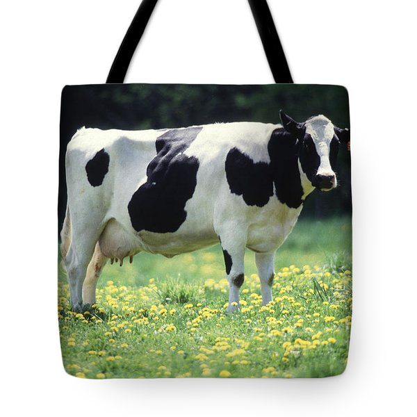 Cow In Pasture Tote Bag by Science Source