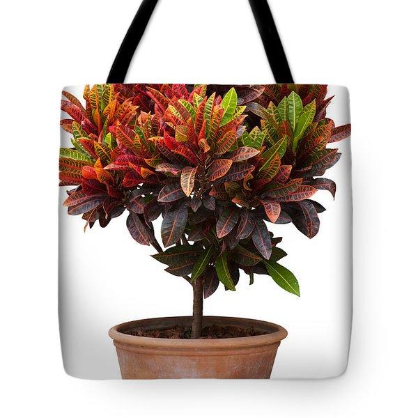 Croton Tree In Flowerpot Tote Bag by Atiketta Sangasaeng