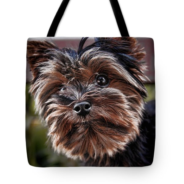 Curious Yorkshire Terrier Tote Bag by Mariola Bitner