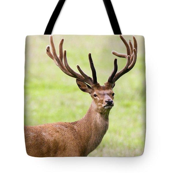 Deer With Antlers, Harrogate Tote Bag by John Short