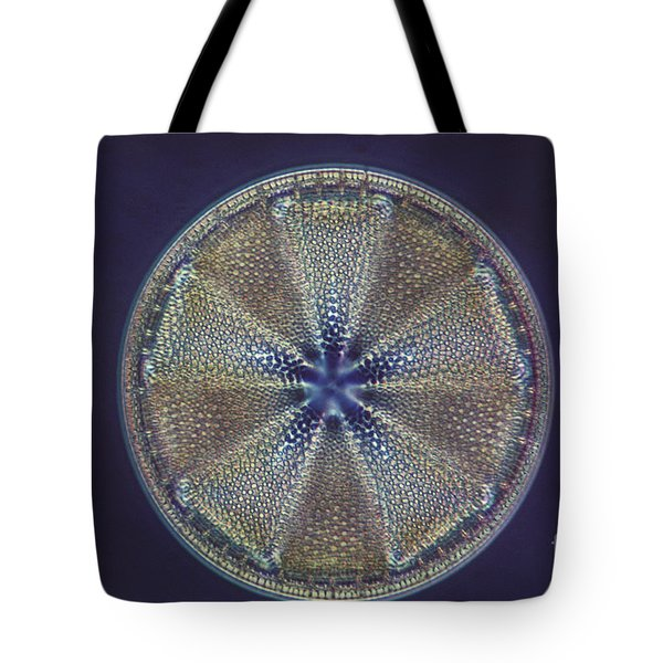 Diatom - Actinoptychus Heliopelta Tote Bag by Eric V. Grave