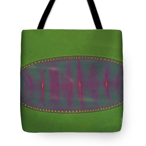 Diatom - Surirella Tote Bag by Eric V. Grave