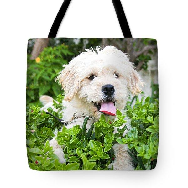 dog Tote Bag by Tom Gowanlock
