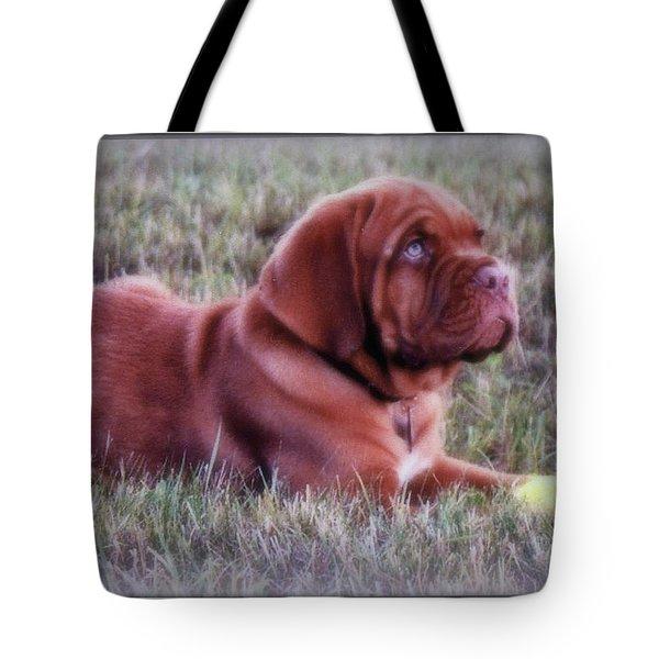 Dogue De Bordeaux Tote Bag by Kay Novy