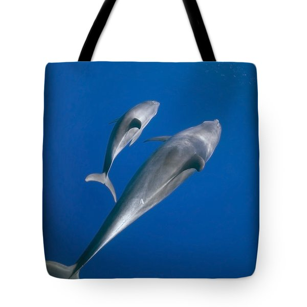 Dolphin And A  Cub Tote Bag by Tom Peled