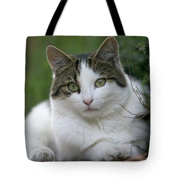 Domestic Cat Felis Catus Portrait Tote Bag by Cyril Ruoso