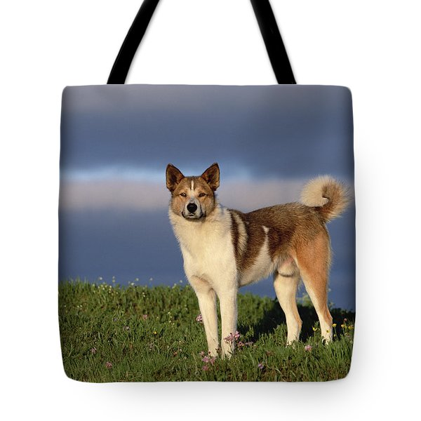 Domestic Dog Canis Familiaris, Taymyr Tote Bag by Konrad Wothe