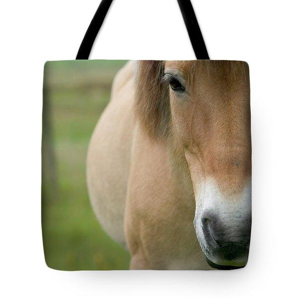 Domestic Horse Equus Caballus Portrait Tote Bag by Cyril Ruoso