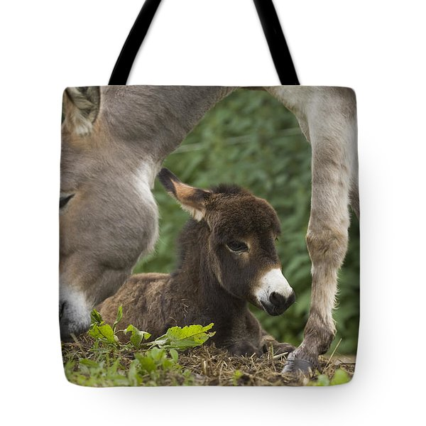 Donkey Equus Asinus Adult With Foal Tote Bag by Konrad Wothe