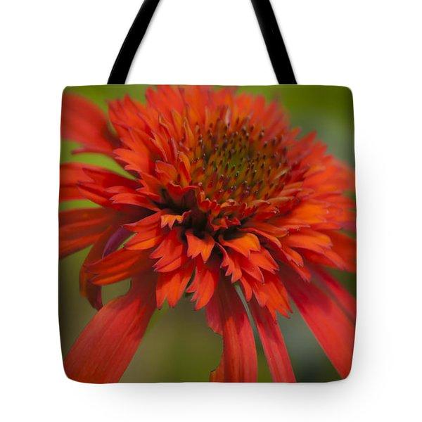 Dreamy Hot Papaya Coneflower Bloom Tote Bag by Teresa Mucha