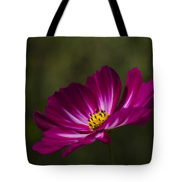Dreamy Pink Cosmos Tote Bag by Clare Bambers