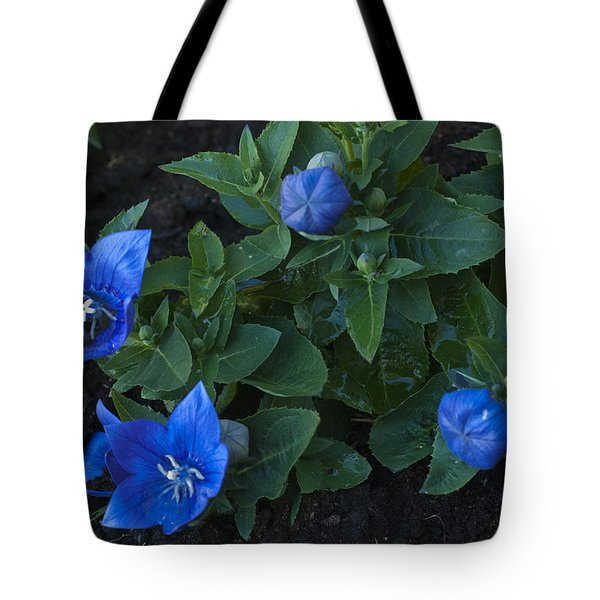 Dwarf Balloon Flower Platycodon Astra Blue 2 Tote Bag by Steve Purnell