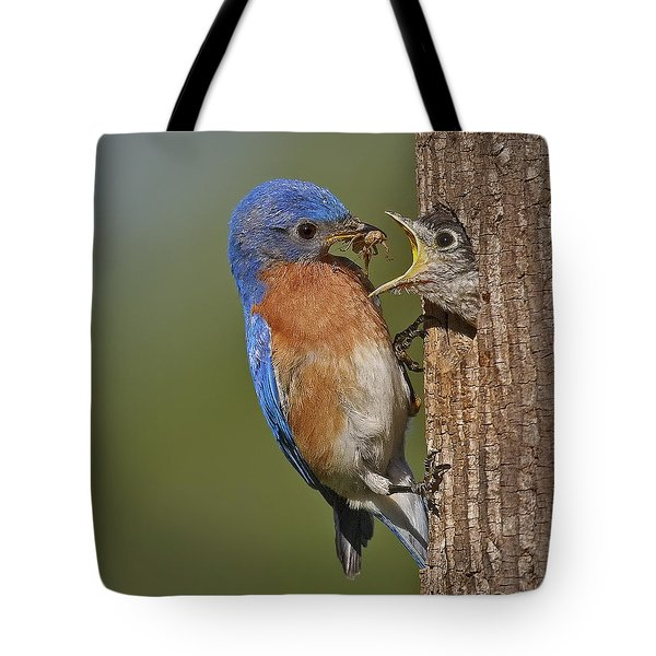 Eastern Bluebird Feeding Chick Tote Bag by Susan Candelario