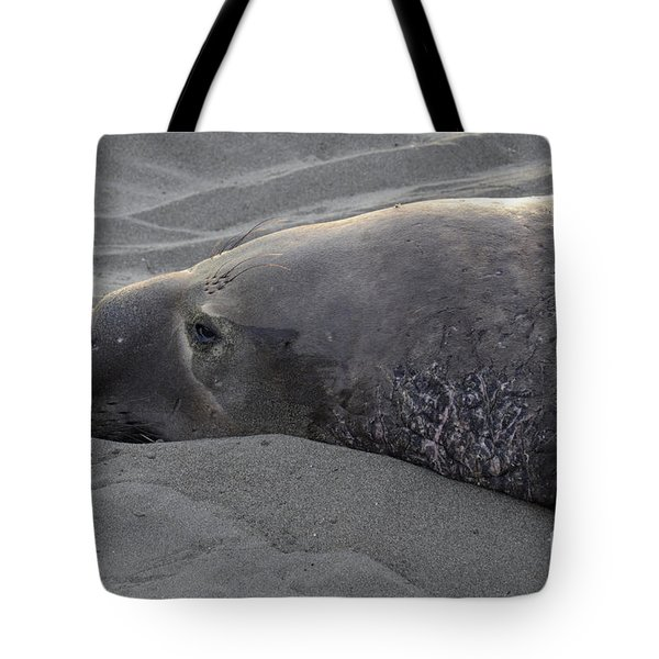 Elephant Seal 5 Tote Bag by Bob Christopher