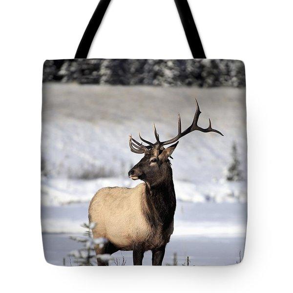 Elk Cervus Canadensis Bull Elk During Tote Bag by Richard Wear